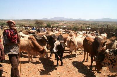 Elway livestock market