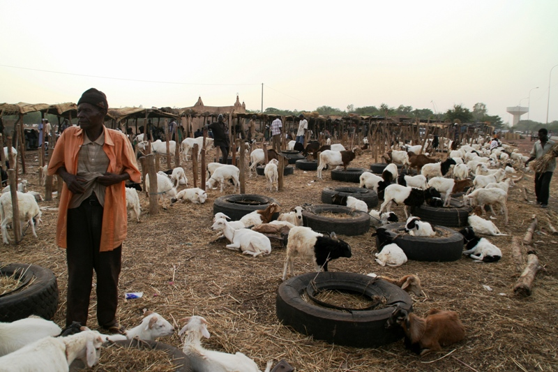 small-ruminants-market-in-ouagadougou