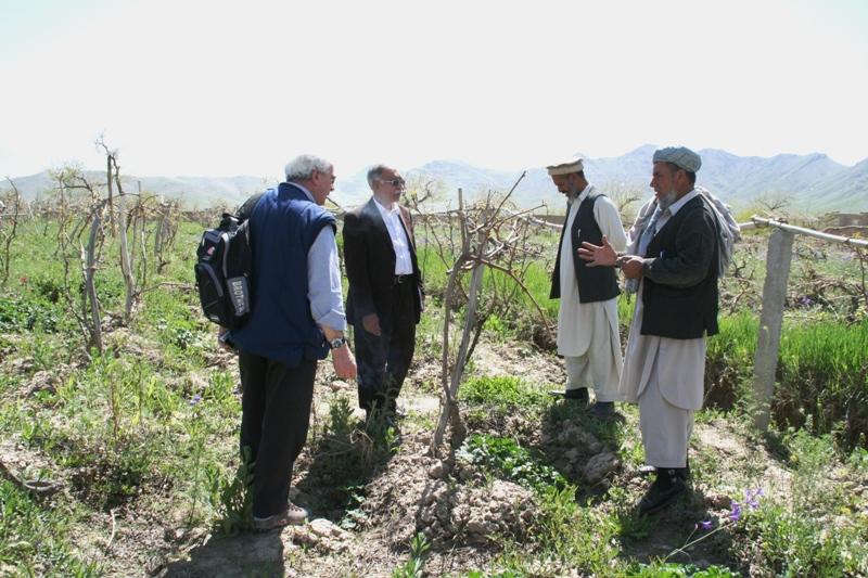 debating-pruning-systems-of-grapes