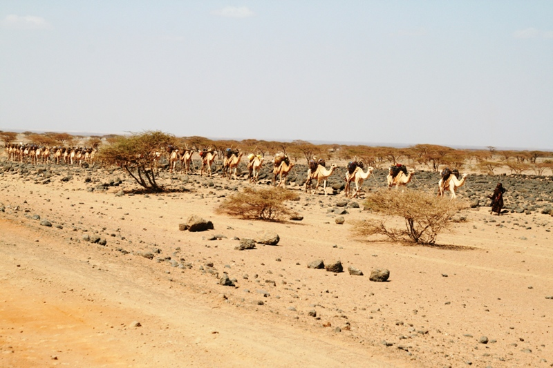gabra-ladies-collecting-water-in-cycles-of-6-days