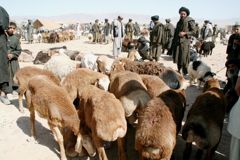 livestock-market-in-terin-kowt-uruzgan