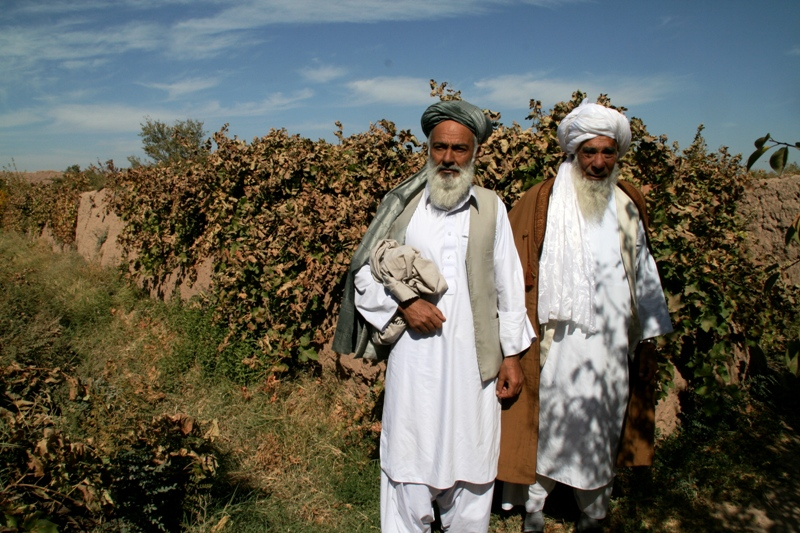 traditional-grape-production-herat