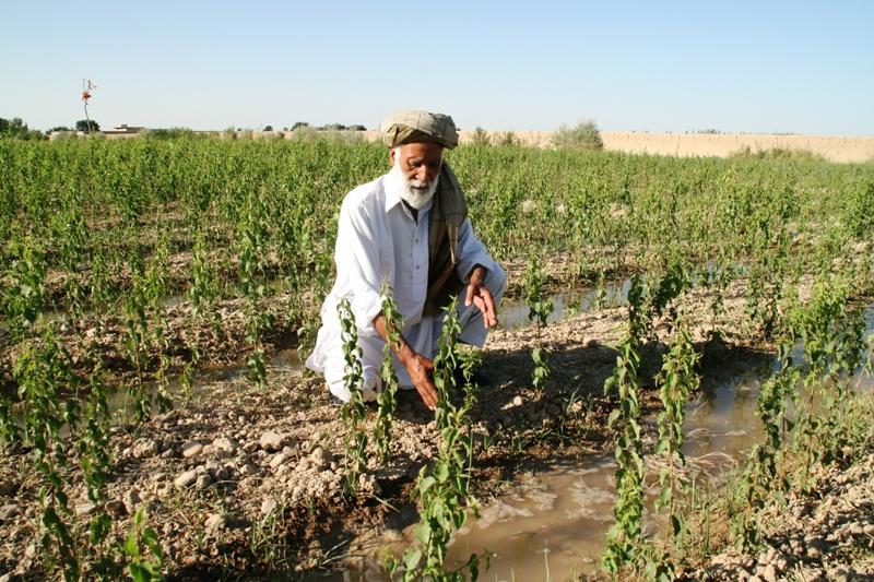 tree-nursery-afghanistan