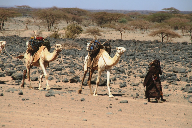 young-gabra-women-collecting-water