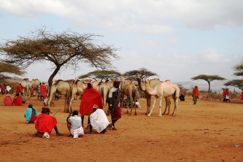 camel-market-in-lolkunyani