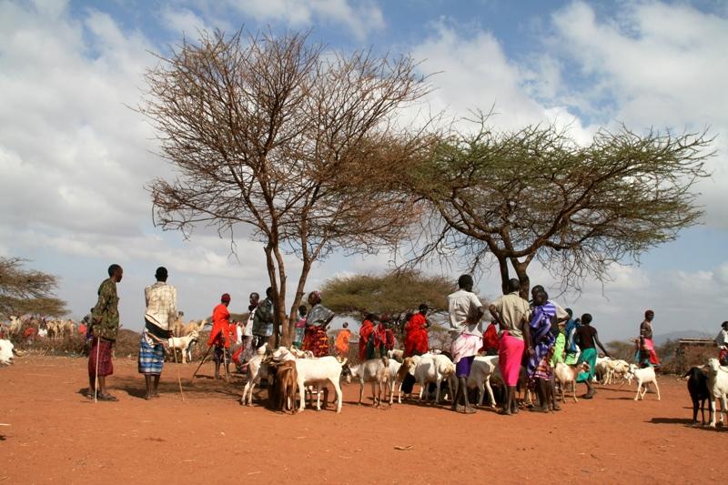 goat-market-in-lolkuniyani